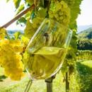 Wine Time: Grenzenloser Weingenuss
